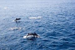 Время игры семьи дельфина Стоковое Изображение