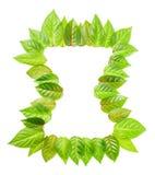 Время концепции рамки свежих зеленых листьев изолировано на белизне Стоковые Фотографии RF