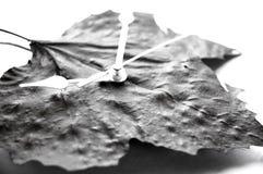 время листьев Стоковое Изображение RF