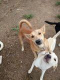 время объятия для близких собак Стоковое Изображение RF