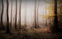 Время осени в лесе стоковые изображения