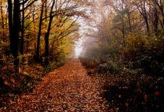 Время осени в лесе стоковые фотографии rf