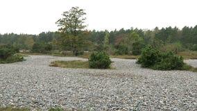 Время осени в поле камня огнива Neu Mukran (острова) Rugen, Германии Feuersteinfeld сток-видео