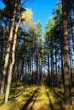 Время осени в древесинах Стоковая Фотография RF