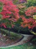 Время осени красивое года Стоковые Фото