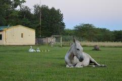 Время остатков на ферме стоковое изображение rf
