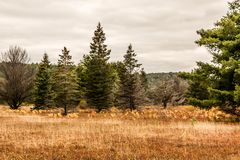 Время падения вегетации деревьев национального парка Algonquin Онтарио красочное вызвало бабье лето Стоковое Изображение