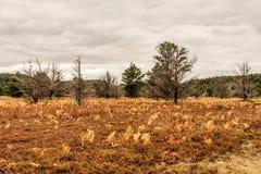 Время падения вегетации деревьев национального парка Algonquin Онтарио красочное вызвало бабье лето Стоковое Изображение RF