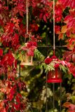 Время падения древесина pomegranate в октябре виноградин украшения каштана осени Подсвечники в форме lanter Стоковое Фото