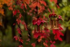 Время падения древесина pomegranate в октябре виноградин украшения каштана осени Подсвечники в форме lanter Стоковые Фото
