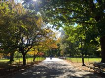 Время парка Стоковые Фото