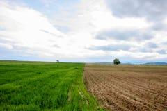 Время поля весной с 2 пакетами различных этапов Стоковое Фото