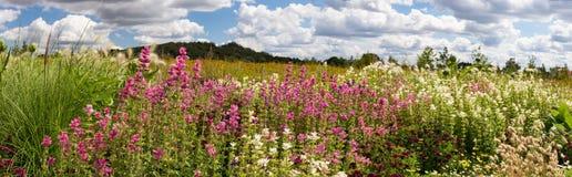 Время поля цветка весной с облаками и горами стоковое изображение rf