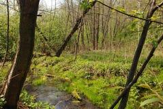 время потока на солнечном дне в лесе вне города стоковые фотографии rf