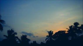Время Солнця установленное с птицей видеоматериал