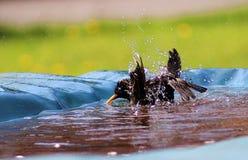 время фото r michael ванны коричневое Стоковые Изображения RF