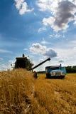время хлебоуборки зернокомбайна Стоковая Фотография
