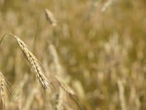 время хлебоуборки к Стоковые Изображения RF