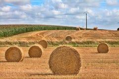 Время хлебоуборки сена Стоковая Фотография RF