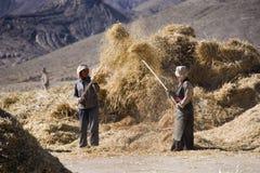 Время хлебоуборки - Тибет Стоковая Фотография RF