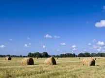 время хлебоуборки Стоковые Фото