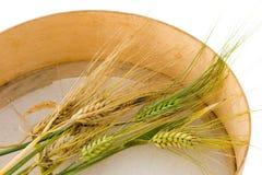 время хлебоуборки 2 Стоковая Фотография RF