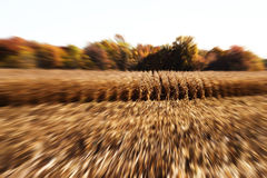 время хлебоуборки Стоковые Изображения RF
