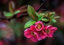 Время цветения, форт Ли стоковые фото