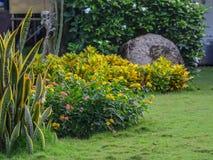 Время цветочного сада весной стоковое фото rf