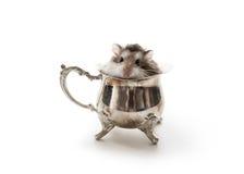Время чая хомяка Стоковая Фотография