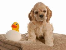 время щенка ванны Стоковая Фотография RF