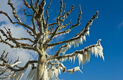 Время льда Стоковое Изображение