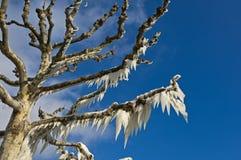Время льда Стоковые Изображения