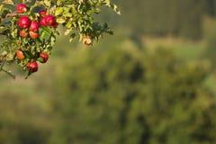 время яблока стоковое изображение