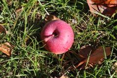 Время Яблока Стоковое Изображение RF