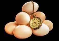 Время яичек Стоковое Фото