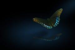 время nite бабочки Стоковая Фотография
