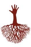 Вручает корень дерева Стоковая Фотография
