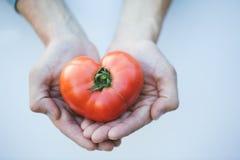 вручает сердце Томат в форме сердца еда здоровая Стоковая Фотография RF
