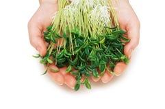 вручает травы держа 2 Стоковая Фотография RF