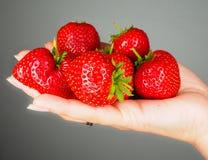 Вручите вполне больших красных свежих зрелых клубник Стоковые Фото