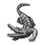 Вручите вычерченного сердитого крокодила с открытым ртом, эскизом Croc, гигантский аллигатор, иллюстрация вектора аллигатора иллюстрация штока