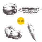 Вручите вычерченное собрание эскиза разных видов перца Состав сладостного перца колокола и накаленные докрасна перцы chili опреде Стоковые Изображения