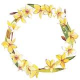 Вручите вычерченной акварели ботаническую иллюстрацию цветков Plumeria Элемент для дизайна приглашений, киноафиш бесплатная иллюстрация