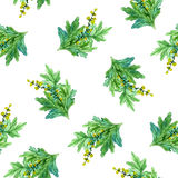 Вручите вычерченной акварели ботаническую иллюстрацию завода полыни картина безшовная иллюстрация вектора