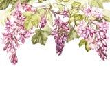 Вручите вычерченной акварели ботаническую иллюстрацию цветков черной смородины Карточка для дизайна приглашений, киноафиш иллюстрация вектора