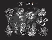 Вручите вычерченной векторной графике творческий succulent, кактус и засадите комплект собрания изолированный на черной предпосыл Стоковые Фото