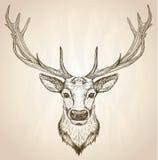 Вручите вычерченную графическую иллюстрацию головы оленей с большими antlers иллюстрация штока