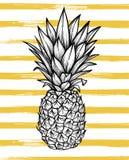 Вручите вычерченную иллюстрацию вектора - ананас с striped backgrou иллюстрация вектора