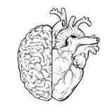 Вручите вычерченную линию halfs человеческого мозга и сердца искусства - логика и концепция приоритета эмоции Напечатайте или тат иллюстрация штока